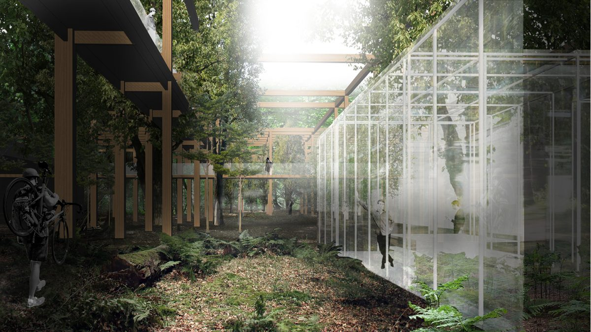 A secluded and quiet meeting room in a clearing. Natural light from the top of the canopy illuminates the forest floor.